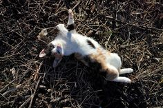 Funny Animals, Cute Animals, Kittens Cutest, Dog Cat, Kitty, Cats, Wordpress, Big, Pet Dogs