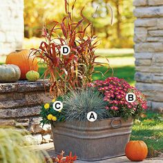 Fall Container Garden mix: A. Blue fescue (Festuca glauca): 1 B. Chrysanthemum 'Cecilia': 2 C. Strawflower (Bracteantha 'Sundaze Golden Yellow'): 1 D. Purple fountaingrass (Pennisetum 'Burgundy Giant'): 1 via Better Homes and Gardens