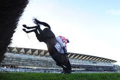 horse and rider fall during the David Johnson Shawbrook Bank Graduation Steeple Chase at Ascot, December 20, 2014.                                                                                                                                                            9 of 36 © Alan Crowhurst/Getty Images for Ascot Racecourse    Ascot, England    A horse and rider fall during the David Johnson