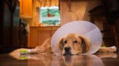 Which dog breeds will cost you the most at the vet? http://qctimes.com/lifestyles/pets/which-dog-breeds-will-cost-you-the-most-at-the/collection_652d11b0-c208-5c97-b0a2-590c657d5e2e.html