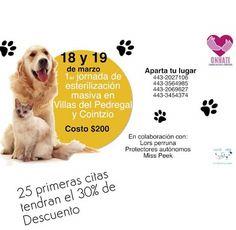 Primera Jornada de Esterilización Masiva para perros y gatos
