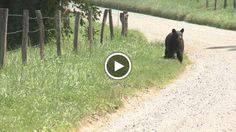 Behaving badly with Cades Cove black bears causes backlash