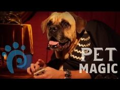 The Great Dogzini sure has a lot of tricks up his sleeves! This week's episode of Pet Magic is smellbinding: