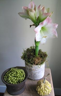 1000 images about centerpieces on pinterest tablescapes for Amaryllis deco