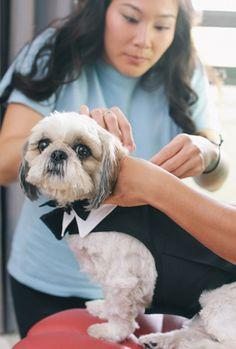 Doggie getting ready for the big day. Brief Encounter, May Weddings, Big Day, Wedding Photos, Dream Wedding, Budget, Challenges, Friends, Diy