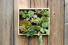 We've just spotted this wonderful vertical garden by Megan Andersen Read in California: A succulent wall-mounted garden in a box. Gardening made simple.