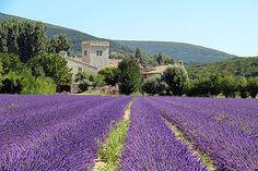 Lavande et bastide en Ardèche