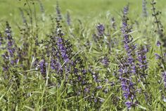 Wild flowers are the best c: #field #purple #canon