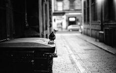 Trashy Bird