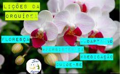 #periscope #orquidea #serfelizagoraoficial #cristynavilelacoach