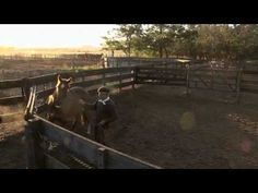 La Doma de Polito Ulloa - Documentary trailer Polo Horses Breaker - YouTube