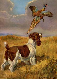 Vintage SPRINGER SPANIEL Dog Print Pheasant Art by plaindealing