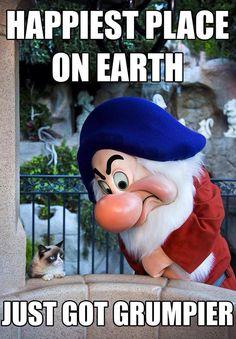 Hahaha #funny #grumpy #grumpycat