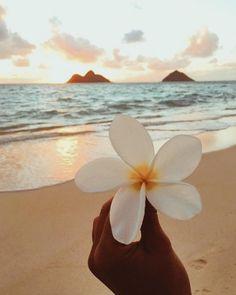 beach photography beach pictures beach outfit beach wedding beach quotes beach h. Strand Wallpaper, Ocean Wallpaper, Summer Wallpaper, Wallpaper Backgrounds, Beach Aesthetic, Flower Aesthetic, Summer Aesthetic, Photography Beach, Nature Photography