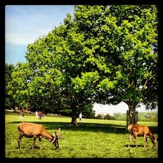 Richmond Park in Richmond, Greater London