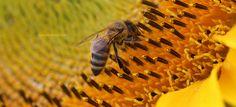 Francezii spun NU pesticidelor. Noi cand ridicam capul?