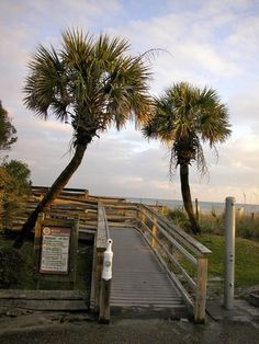 Myrtle Beach South Carolina Summer After Growing Up This Was My Vacation Spot I Absolutely Love Our Palmetto Trees State Tree