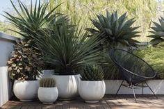Apartment balcony garden terraces plants trendy Ideas - All About Balcony Outdoor Pots, Outdoor Gardens, Outdoor Spaces, Small Gardens, Outdoor Living, Backyard Patio, Backyard Landscaping, Patio Planters, Landscaping Ideas