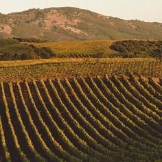 Sponsored: a trip to Blackbird vineyards with Bon Appétit and BMW.