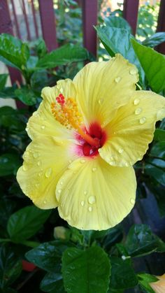 123 Best Caribbean Flowers Fish Coral Images In 2018 Tropical