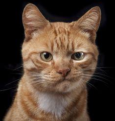 Kedi, Köpek ve At Portrelerinden Oluşan Değişik Bir Fotoğraf Projesi - http://www.aylakkarga.com/kopeklerinkedilerin-ve-atlarin-kisisel-portreleri/