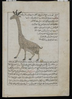 The Freer Gallery of Art and the Arthur M. Sackler Gallery are the Smithsonian's museums of Asian art. Encyclopedia Of Islam, Fabulous Beasts, Giraffe, Elephant, Muslim Culture, Freer Gallery, Sea Serpent, Islamic World, New York Public Library