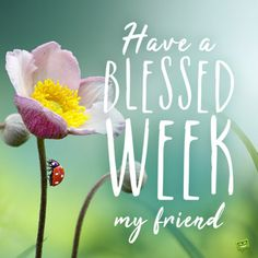 Blessed week image to inspire you. Positive Good Morning Quotes, Morning Words, Good Morning Messages, Good Morning Wishes, Good Morning Images, Monday Morning Greetings, Happy Monday Morning, Monday Blessings, Morning Blessings