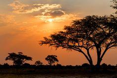 4nt South-Africa Safari Tour
