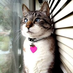 This cat reminds me of my Aunts cat that me and my dad call Ray. I want a cross-eyed cat!!