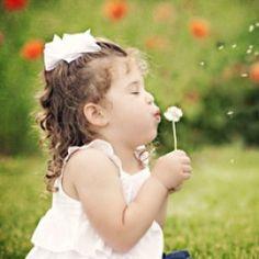 summer dandelions
