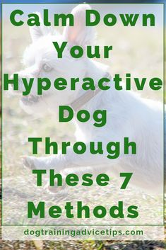 Calm Down Your Hyperactive Dog Through These 7 Methods – Dog Training Advice Tips – Dog Care and Health Tips – edog Guard Dog Training, Training Your Dog, Cat Care Tips, Dog Care, Pet Tips, Hyperactive Dog, Dog Health Tips, Cat Health, Dog Training Videos