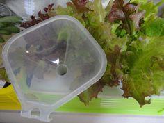 Green Plants, Blog Entry, Ethnic Recipes, Garden, Garten, Lawn And Garden, Gardens, Gardening, Outdoor