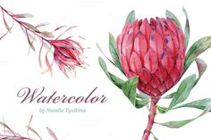 Watercolor Protea & Leucadendron by Natalia Tyulkina on Creative Market Protea Art, Protea Flower, Watercolor Sketch, Watercolor Flowers, Watercolor Paintings, Fabric Artwork, Flower Clipart, Whimsical Art, Art Sketchbook