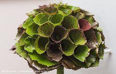 ihr-florist.at - Detail