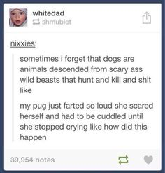 sometimes i forget that dogs are animals descended from scary ass wild beasts that hunt and kill and shit like  my pug just farted so loud she scared herself and had to be cuddled until she stopped crying like how did this happen