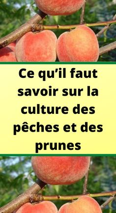 Fruits Déshydratés, Agriculture, Planters, Vegetables, Diets, Garden Deco, Backyard Farming, Remove Mold, Two Trees