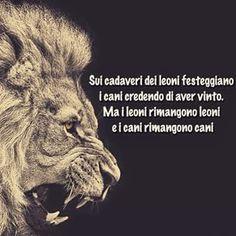 i leoni sono sempre leoni e cani rimangono - Cerca con Google