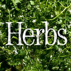 How to Use Fresh Herbs, from Chervil and Chives to Mint and Tarragon: BA Daily