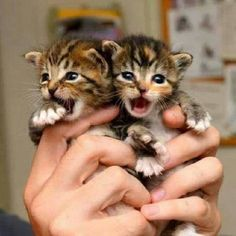 Awww....teeny tiny kittens !!