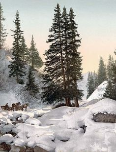 Davos, in winter, Grisons, Switzerland