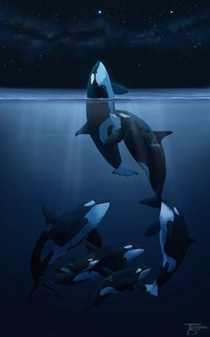 Orca Art This is how these beautiful creatures should be. Arte Orca, Orca Art, Beautiful Creatures, Animals Beautiful, Cute Animals, Orcas, Whale Art, Delphine, Ocean Creatures