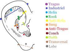 Emplacements pierçing oreilles