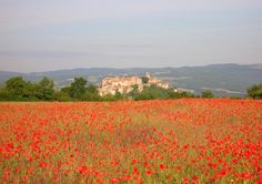 Un champ de coquelicots et le village de Cordes-sur-Ciel, France