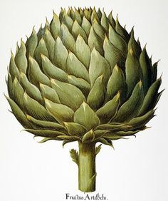 artichoke-one of my favorite foods!  Have lots of memories of eating these dipped in butter..yum!