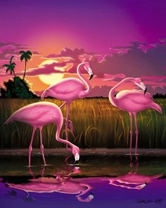 Flamingoes Print featuring the photograph Flamingoes Flamingos Tropical Sunset Landscape Florida Everglades Large Hot Pink Purple Print by Walt Curlee