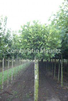 Assortiment - Combinatie Mauritz