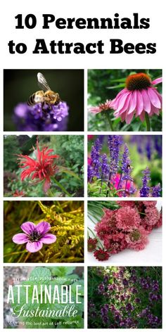 Plant THESE for the BEES! Plant around the edges of your backyard fruit & veggie garden to attract bees and help your garden flourish