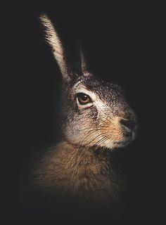 Dark side of the rabbit