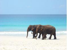elephants on the beach, cool!