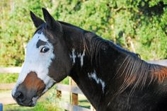 #horses When you see the whites of Bo Curandero's eyes, beware.....his explosive side is a split second away